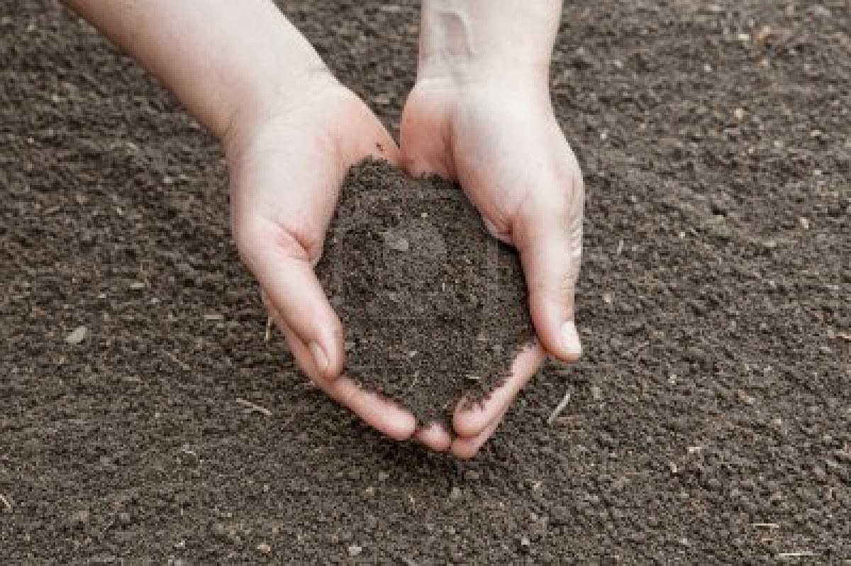Cara Menghilangkan Tanah Kuburan Di Warung