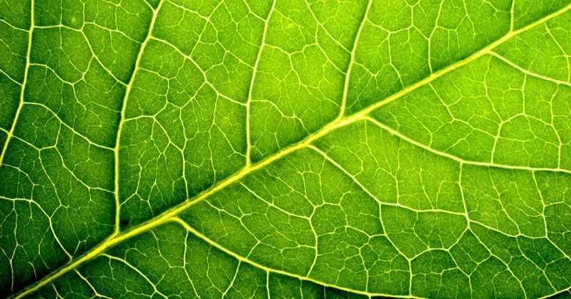 Contoh, Fungsi, Rumus, Reaksi, Hasil Dan Pengertian Fotosintesis Menurut Para Ahli