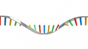 Contoh, Macam Macam, Tipe Tipe, Fungsi, Sifat Dan Pengertian RNA Menurut Para Ahli