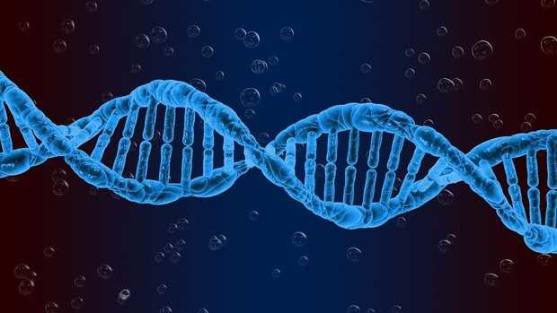 Struktur, Replikasi, Ciri Ciri, Fungsi, Komponen Dan Pengertian DNA Menurut Para Ahli
