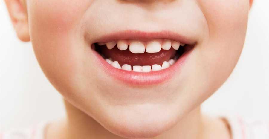 Fungsi organ mulut pada sistem pencernaan manusia berdasarkan penjelasan para ahli