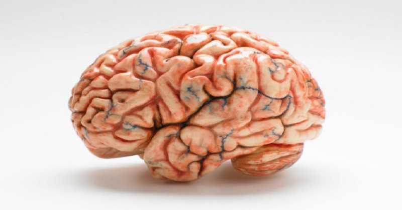 Otak Kecil Pengertian, Fungsi, Struktur dan Bagian Otak kecil
