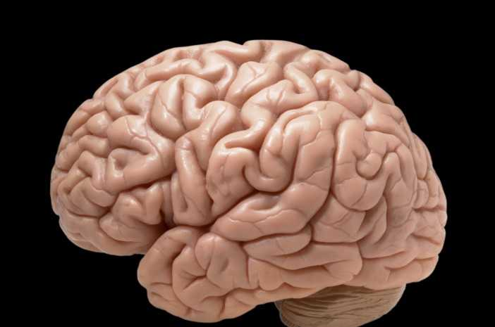 Otak Kecil
