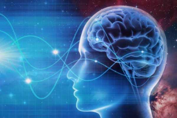 Otak Besar : Pengertian, Fungsi, Struktur dan Bagian Otak Besar